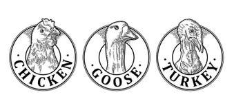 土耳其、鸡和鹅朝向与字法 葡萄酒传染媒介板刻 向量例证