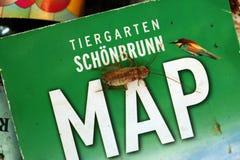 土耳其斯坦蟑螂(滔滔不绝lateralis),亦称生锈 免版税库存照片