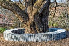 土耳其榛树。 免版税库存图片