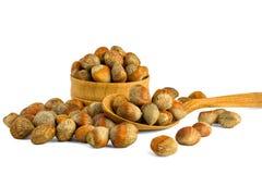 土耳其榛树榛子坚果  榛子坚果的概念  库存照片