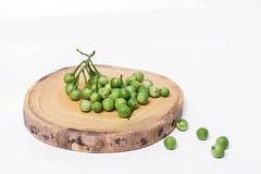 土耳其莓果茄属torvum Sw 在空白背景 有选择性 图库摄影