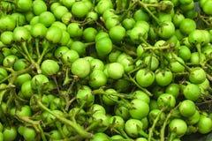 土耳其莓果 免版税库存图片