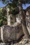 土耳其,鬼城Kayakei,对希腊教会的石门入口,前景的生长杉木 库存图片