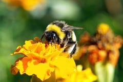 土蜂上色愉快多种 库存照片