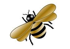 土蜂金子 免版税库存图片