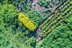 土豆、夏南瓜、黄瓜和莳萝植物在一个领域在俄罗斯的库尔斯克地区 免版税库存图片
