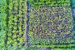 土豆、甜菜和红萝卜植物在一个领域在俄罗斯的库尔斯克地区 库存图片