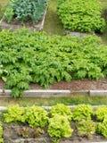 各种各样的菜被上升的床种植土豆 免版税库存照片