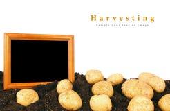 土豆和框架地球上 图库摄影
