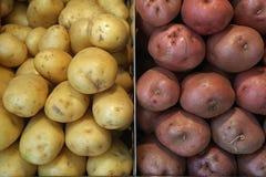 土豆品种  库存照片