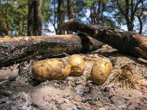 土豆在冷却的灰篝火 免版税库存图片
