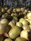 土豆堆 免版税库存图片