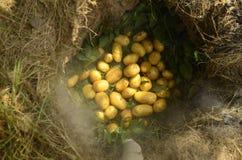 土豆室外烘烤  库存图片