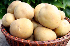 土豆年轻人 库存照片