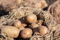 土豆庄稼 库存图片