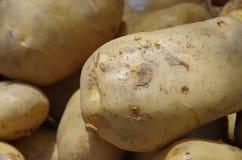 土豆是在平民桌上的一个根本纤巧  免版税库存照片