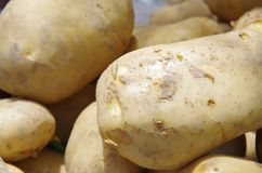 土豆是在平民桌上的一个根本纤巧  免版税库存图片