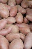 土豆未加工的蔬菜 免版税库存照片