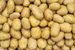 土豆未加工的蔬菜 库存照片