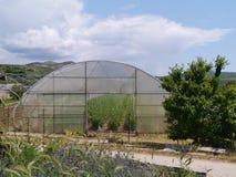 土豆植物在塑料一个克罗地亚玻璃房子里  库存图片