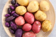土豆的不同的类型 库存照片