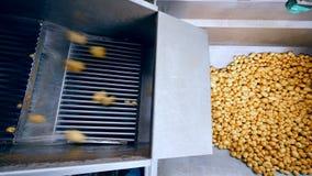 土豆肿胀顶视图落入容器的 股票视频