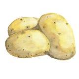 土豆 手拉的水彩 库存图片