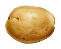 土豆 库存例证