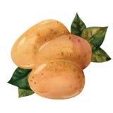 土豆 向量例证