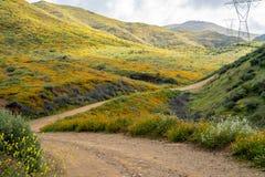 土足迹通过步行者峡谷在鸦片野花superbloom期间的湖埃尔西诺 库存图片