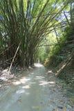 土路和竹子森林在哥伦比亚 免版税库存图片