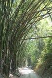 土路和竹子森林在哥伦比亚 免版税库存照片
