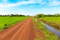 土路和绿色米领域在蓝天下做一个非常好漂亮的东西或人 免版税库存图片