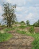 土路和老金合欢树 库存照片