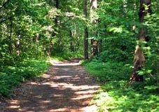 土路在一个橡木树丛里在夏天 库存照片