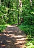 土路在一个橡木树丛里在夏天 免版税库存照片