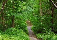 土路在一个橡木树丛里在夏天 库存图片
