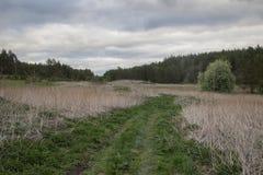 土路在中间乌拉尔森林里  库存图片
