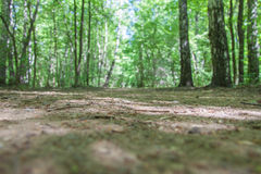 土路在夏天森林里 免版税库存照片