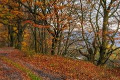 土路在有带红色叶子的森林里 库存照片