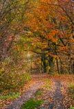 土路在有带红色叶子的森林里 免版税库存图片