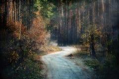 土路在杉木秋天森林里 免版税库存图片