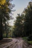 土路在森林里 免版税库存照片