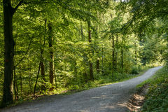 土路在森林,斯图加特 库存照片