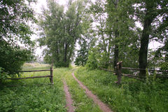 土路在森林 免版税库存照片