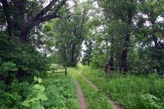 土路在森林 免版税库存图片