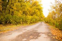 土路在秋天 免版税库存照片