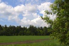 土路通过一个绿色领域在蓝天下 图库摄影