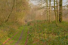 土路throug一个光秃的冬天森林在富兰德,比利时 免版税图库摄影