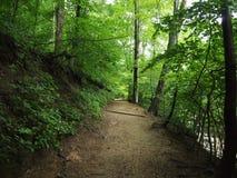 土道路在森林里 免版税库存照片